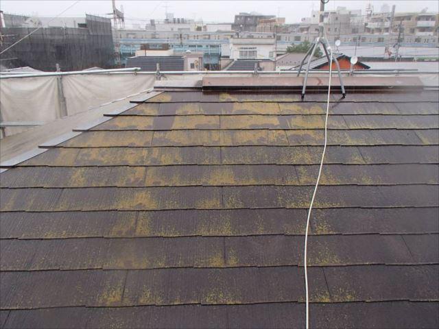築21年目の屋根です。全面にコケがびっしりと生えていました。