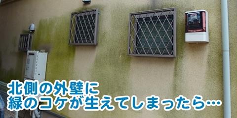 モルタル外壁がコケっぽく緑になったら…
