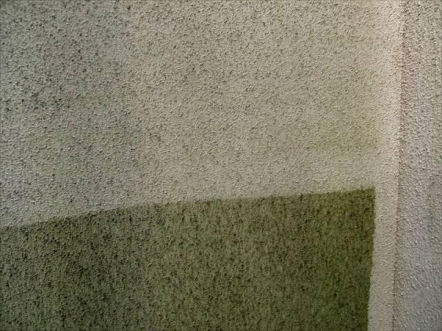高圧洗浄で外壁のコケもしっかり落とします