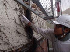 外壁にこびりついていたツタを一生懸命手作業で剥ぎ取っていきました。