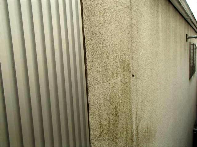 リシン吹き付けの外壁にはコケが至る所に!画像ではわかりませんが、細かいクラックがたくさん入っています。