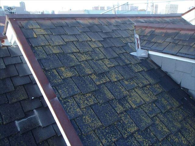 施工前の屋根です。コケがびっしりです。
