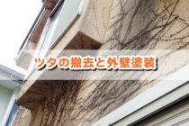 外壁のツタを撤去して塗装をする正しい手順