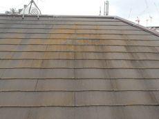 屋根はコケが目立ってきています。