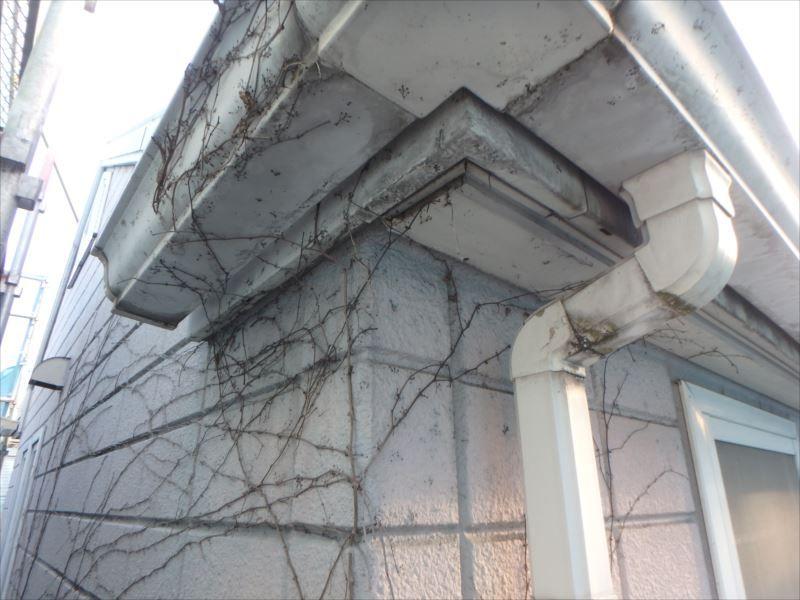 外壁には一部、ツタが這っている部分もあり、撤去して塗装を行う予定です。