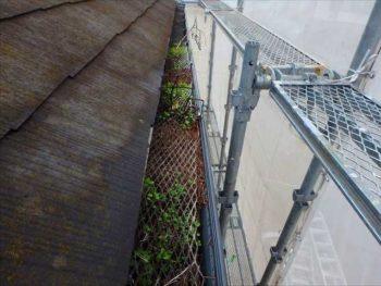 落ち葉除けネットの中に落ち葉が...