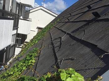 施工前の屋根の様子。 Y様のおうちは軒下の面積が少ないからか、外壁を伝って屋根までツタが伸びていました。