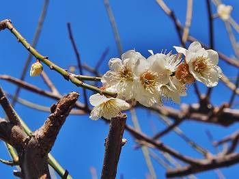 お庭の木の花