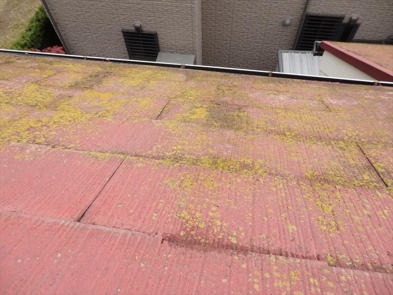 屋根にはコケがたくさん生えていました。