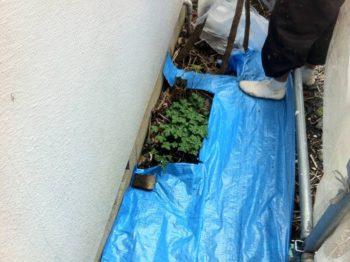 植木にも配慮して地面の養生をします