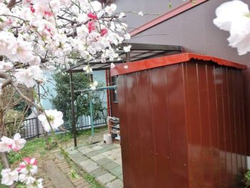 お庭には桜が花開いていました。 綺麗になったおうちと相まって、外回りは一気に華やかな雰囲気に。
