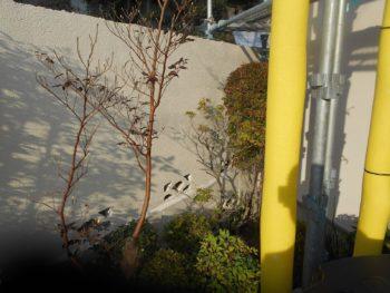 隣との境になる塀もきれいに塗りました。