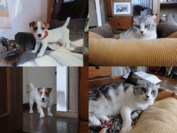 「わが家のペット写真コンテスト2018」仲良く暮らすワンちゃん&猫ちゃん♪