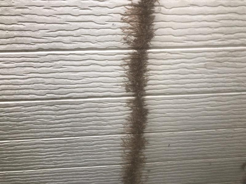 ツタの根だけになっている部分。外壁を痛めないように慎重に剥がしていきます。