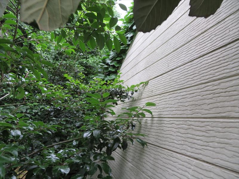 外壁部分にツタ(写真奥)が絡んでいて、塗装前にツタの撤去が必須となります。