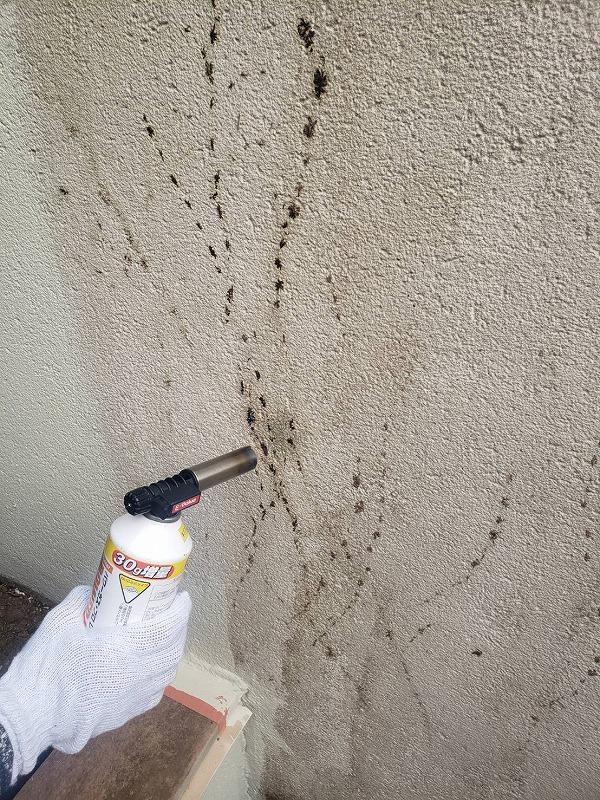 塀の塗装です。壁につる性の植物がはっていた後を、まずガスバーナーで焼いて完全に根が残らないようにします。