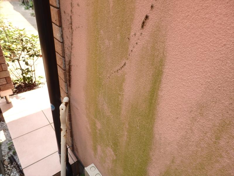 ツタが枯れて取れたと思われる跡が線状に残っています。ツタの撤去は壁に根が入り込むのでなかなか大変です。