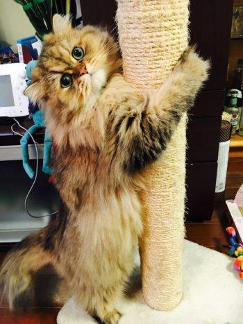 ペット写真コンテスト 猫