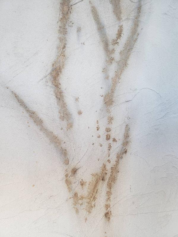 ツタは手で取り除くだけでは根が残るので、最後は焼いて取りきります。