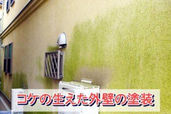 外壁塗装 コケ