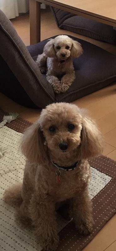ペット写真コンテスト 犬